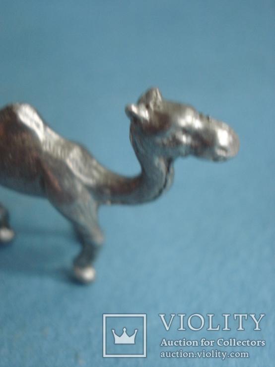 Верблюд., фото №4