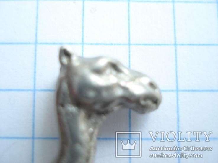 Верблюд., фото №7