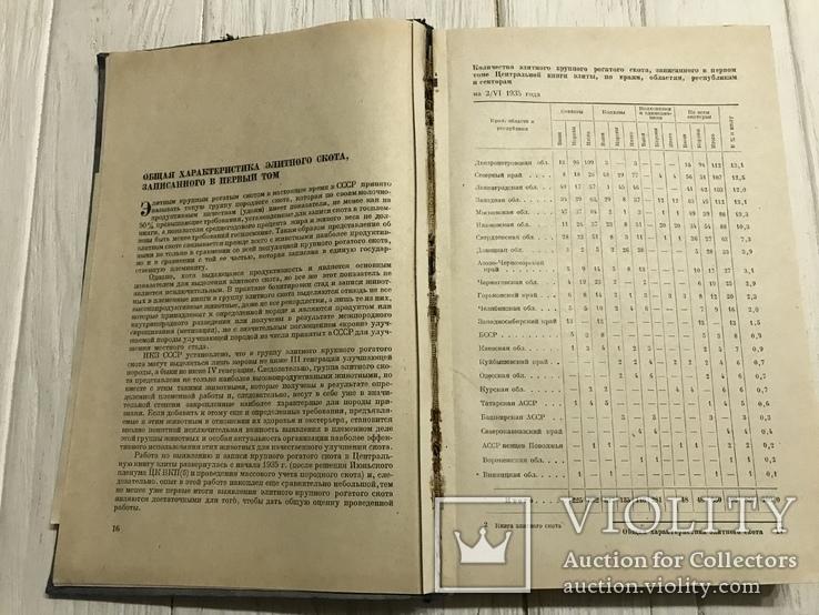 1937 Элитный крупный рогатый скот, фото №6