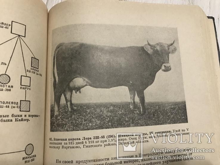 1937 Элитный крупный рогатый скот, фото №10