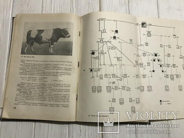 1937 Элитный крупный рогатый скот, фото №11