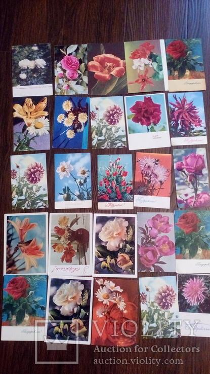 60 старых открыток с цветами + бонус, фото №3