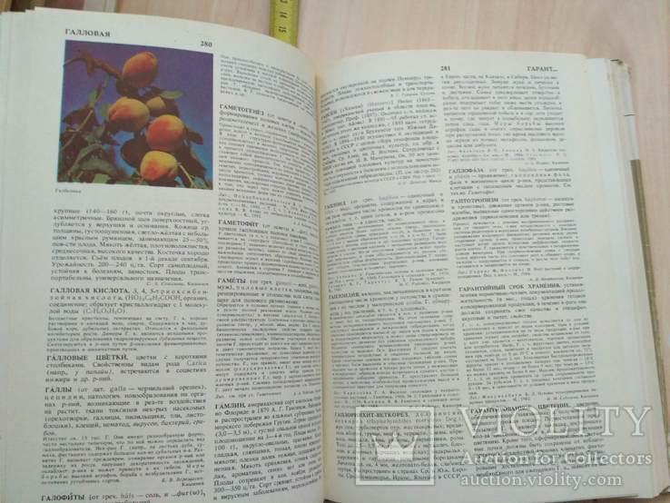 Садоводство Энциклопедия 1 том 1990р., фото №11