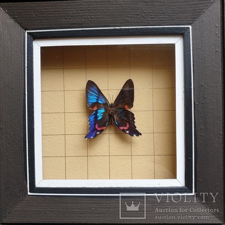 Бабочка, фото №3