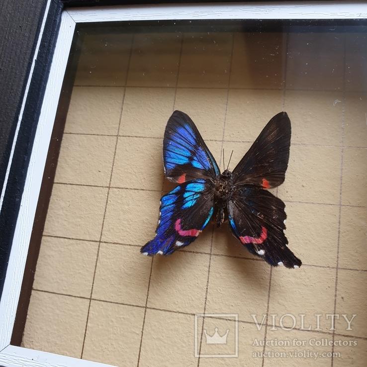 Бабочка, фото №4