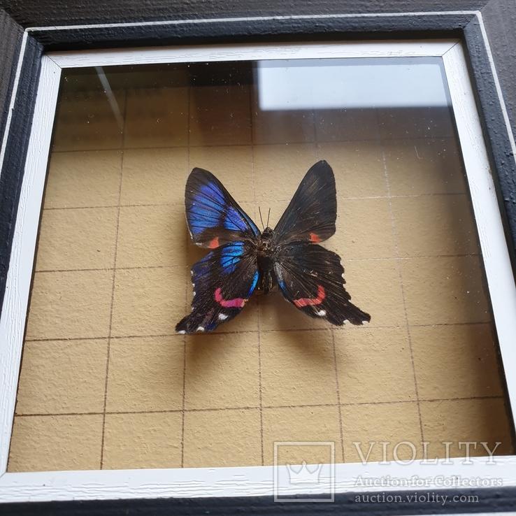 Бабочка, фото №6