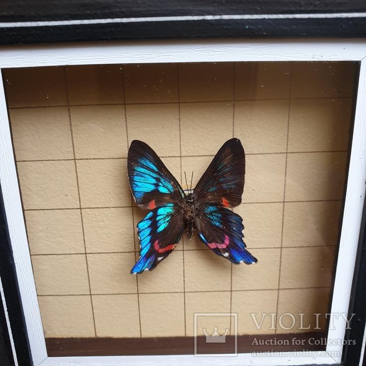 Бабочка, фото №7
