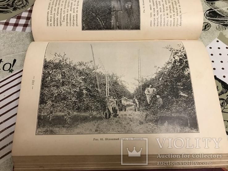 Промышленное плодоводство 1898 год