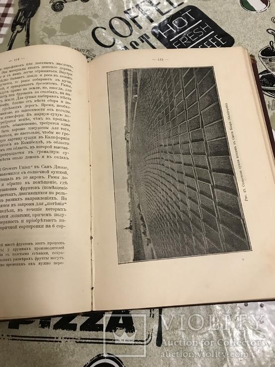 Промышленное плодоводство 1898 год, фото №7