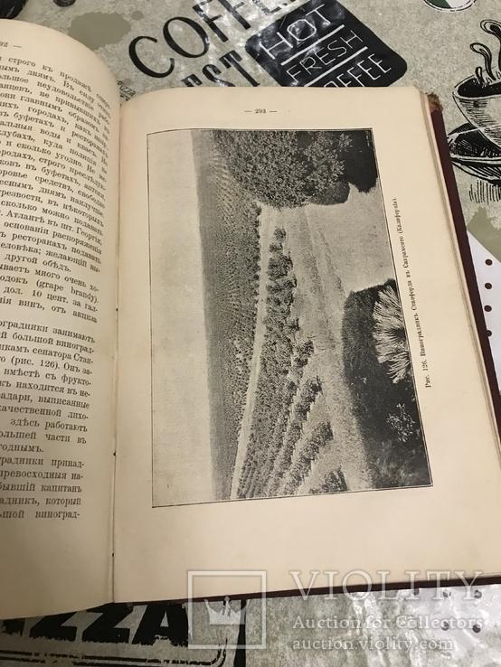 Промышленное плодоводство 1898 год, фото №8