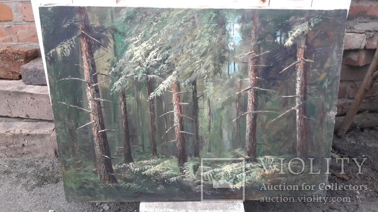 Пищанский лес., фото №5