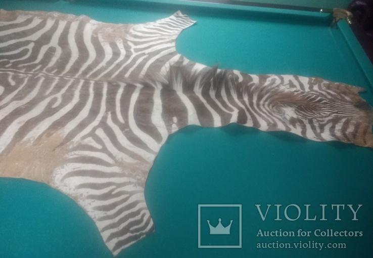 Шкура зебри Південна Африка, фото №3