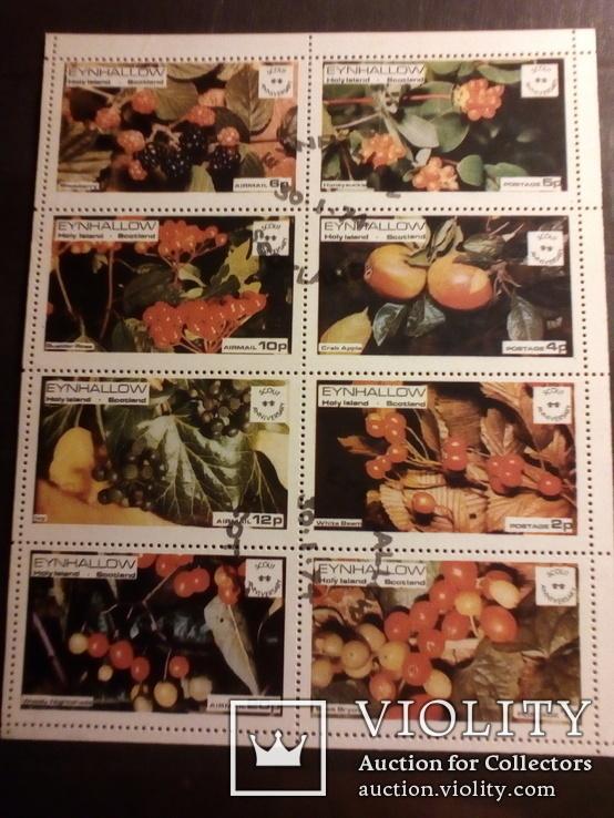 Лист ягоды, фото №2