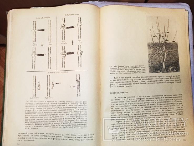 Размножение садовых растений. Х. Гартман, Д. Кестер. Перевод американ. издания 1959 г., фото №6