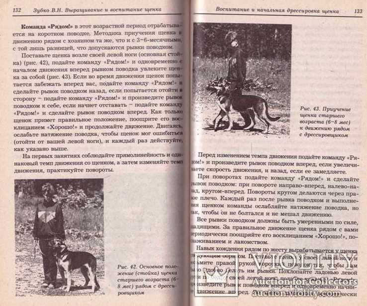 Выращивание и воспитание щенка.2005 г., фото №9