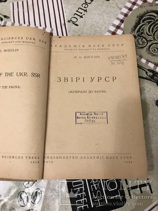 Звірі України 1938рік, фото №4