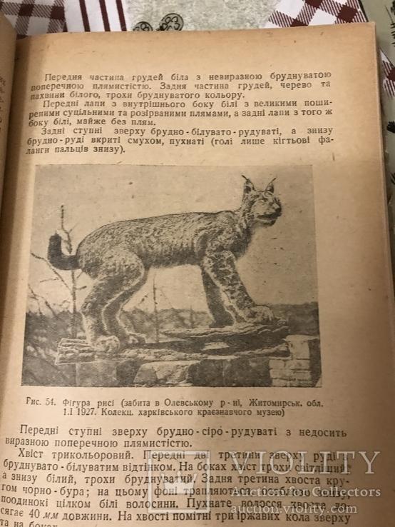 Звірі України 1938рік, фото №5