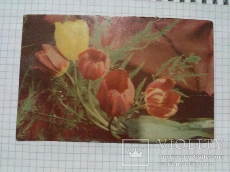"""Открытка """"Тюльпаны"""", фото Г. Костенко, """"Советский художник"""", Москва, 1966 г, 1 шт, фото №2"""