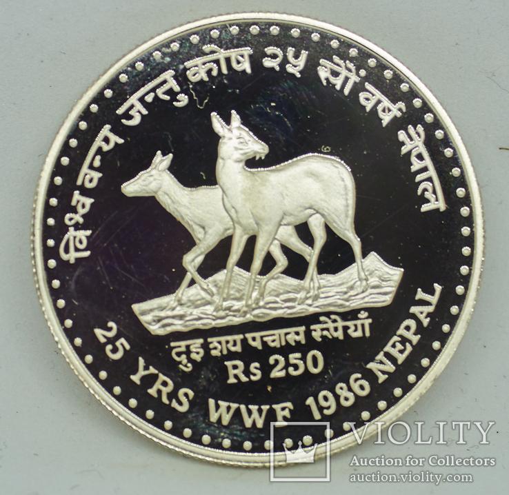 25 лет Всемирному фонду дикой природы Непал 250 рупий, 2043 (1986), фото №3