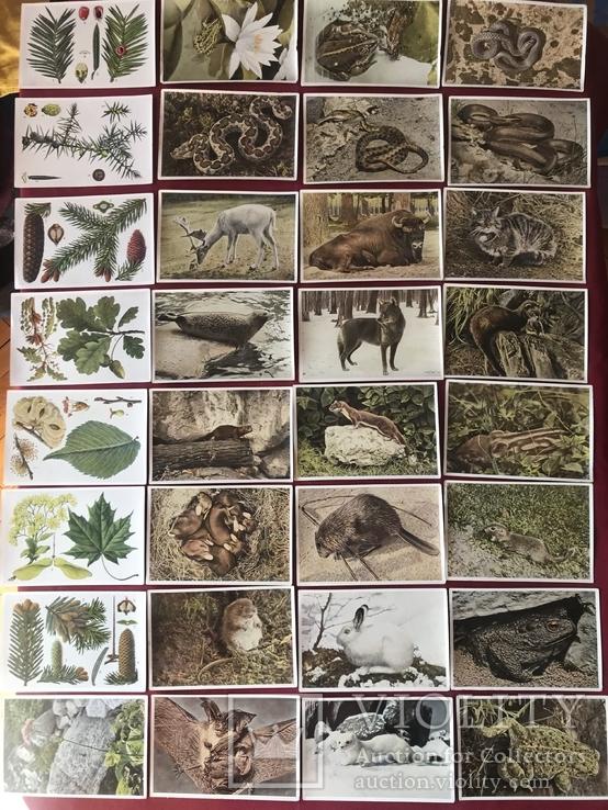 Германские открытки послевоенного периода Флора и Фауна, фото №2