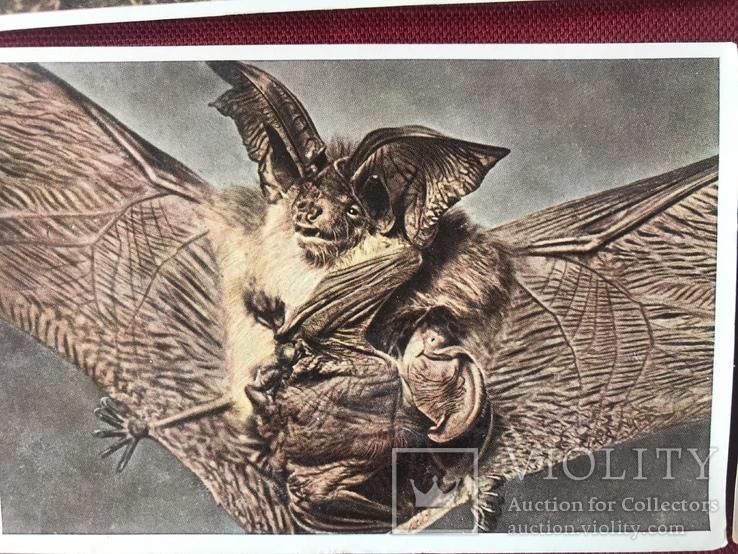 Германские открытки послевоенного периода Флора и Фауна, фото №3