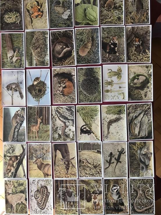 Германские открытки послевоенного периода Флора и Фауна, фото №4