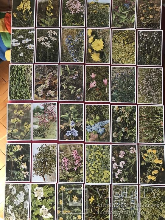 Германские открытки послевоенного периода Флора и Фауна, фото №7