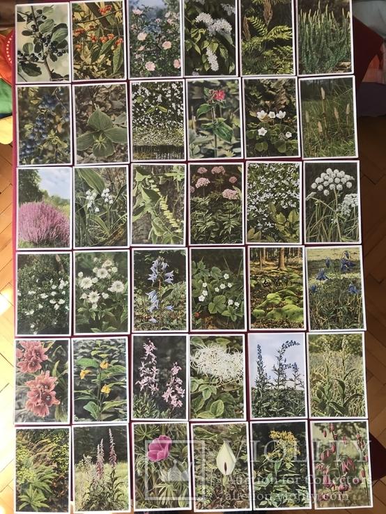 Германские открытки послевоенного периода Флора и Фауна, фото №8
