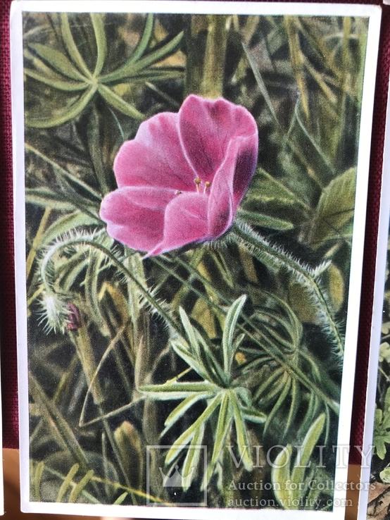 Германские открытки послевоенного периода Флора и Фауна, фото №9