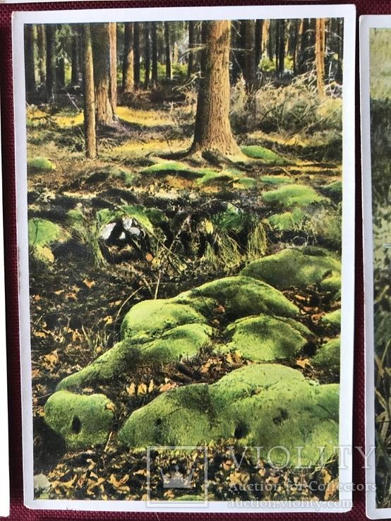 Германские открытки послевоенного периода Флора и Фауна, фото №10