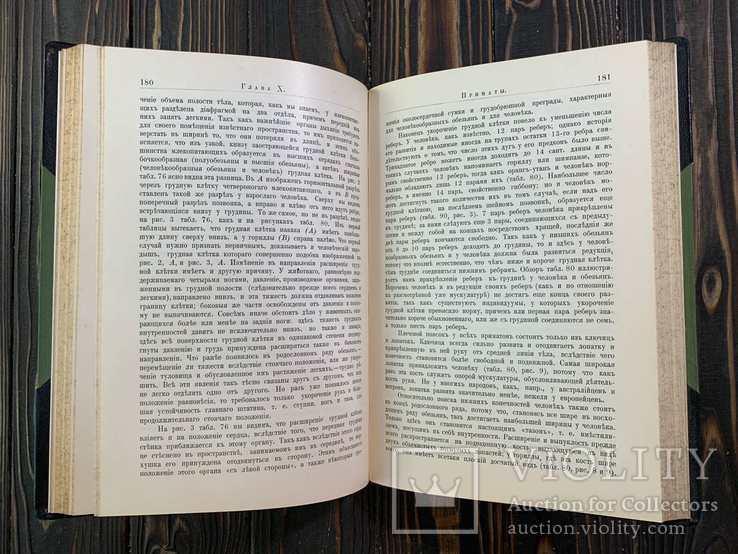 1909 Гюнтер, К. Происхождение и развитие человека, фото №3