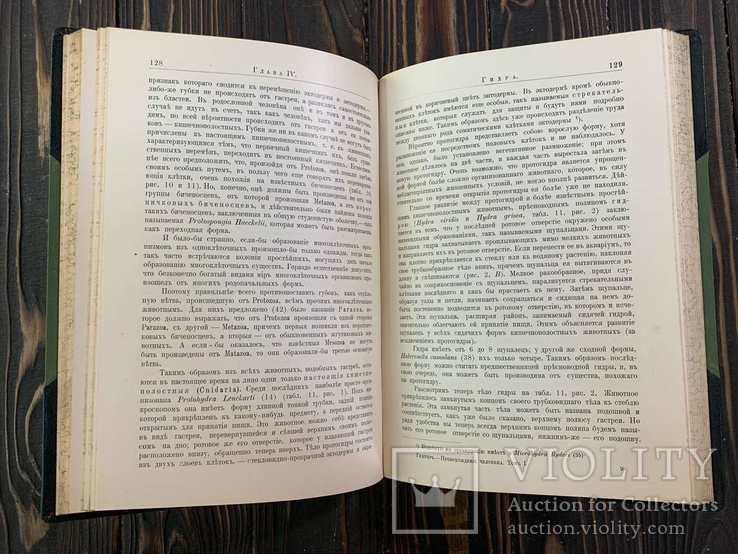 1909 Гюнтер, К. Происхождение и развитие человека, фото №9