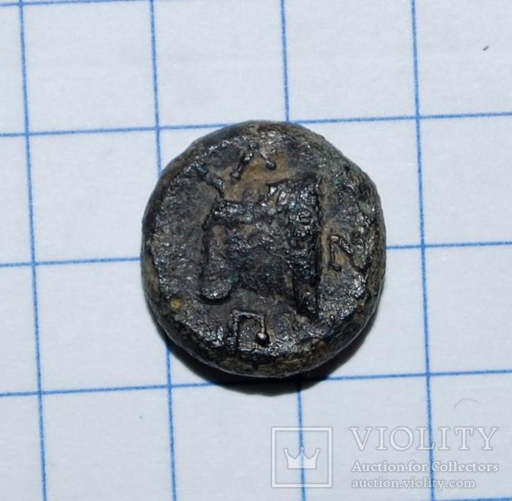 Пантикапей.  Бычек  ПАN    IV в.до.н.э., фото №2