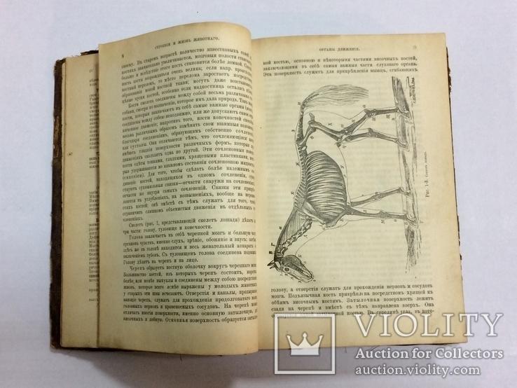 Лечебник домашних животных 1896 г, фото №6