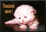 Котенок, фото №2