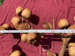Ветка яблони из можевельника, фото №9