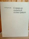 Книжная Иллюстрация. УВ.формат. Тираж 10 тыс., фото №2