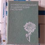Илюстрированая энциклопедия растений, фото №2