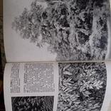Илюстрированая энциклопедия растений, фото №7