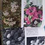 Илюстрированая энциклопедия растений, фото №8