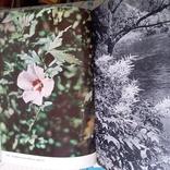 Илюстрированая энциклопедия растений, фото №9