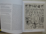 """Прически.От античности до наших дней"" Шарлотта Филл, 2014 год, тираж 3 000, фото №6"