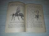 Пчела и здоровье человека 1964, фото №13