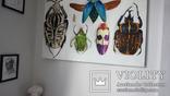Энтомологическая коллекция насекомых №2, фото №10