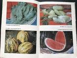 1988 Овощи Фрукты Виноград. Хранение и переработка, фото №2
