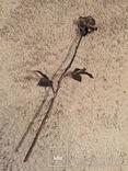 «Роза Мерцалова», фото №3