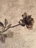 «Роза Мерцалова», фото №8