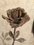 «Роза Мерцалова», фото №10