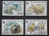 Белые медведи. 1987 год., фото №2