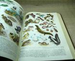 Биологический энциклопедический словарь 1989, фото №7